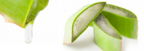 Le-massage-à-l'Aloe-Vera-une-réelle-source-de-beauté-et-de-détente-au-quotidien-lipidrainor-cosmosoft-blog-